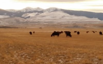 9 Steps to Starting Out or Expanding in the Cattle Business
