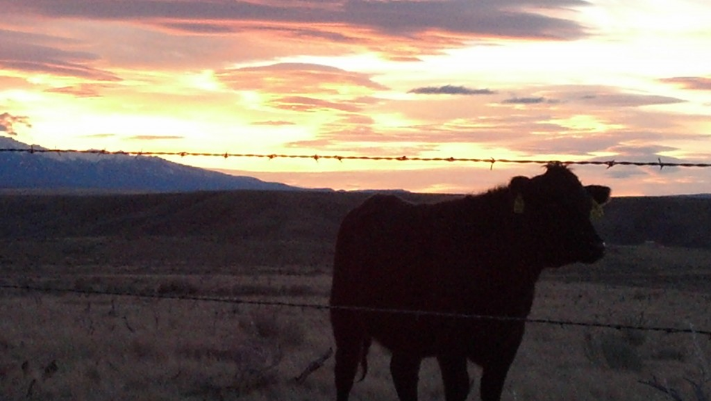 6 Steps to Maximizing Day to Day Productivity on a Successful Cattle Operation